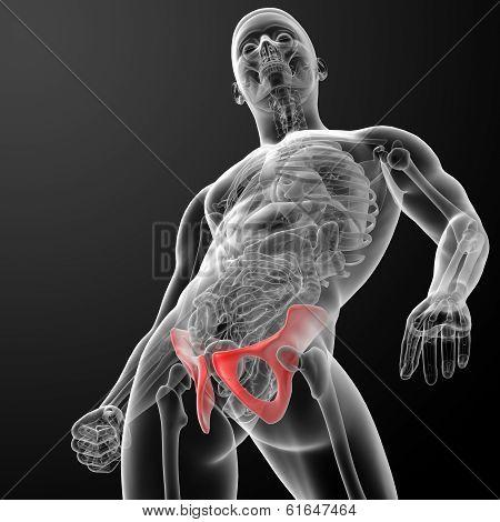 3d render pelvis under the X-rays