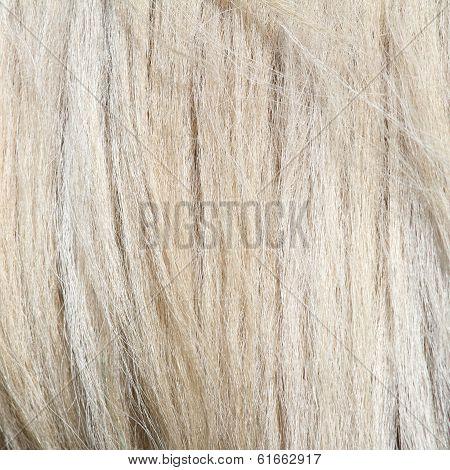 Pony White Mane
