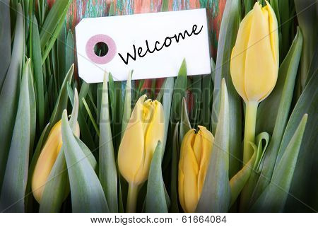 Tulip Background With Welcome