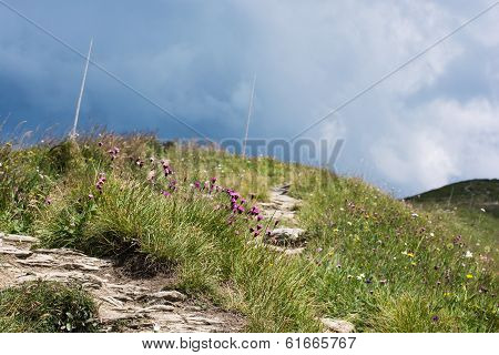 Footpath In The Mountains And Flowers