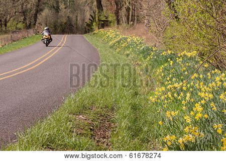 Spring Freedom