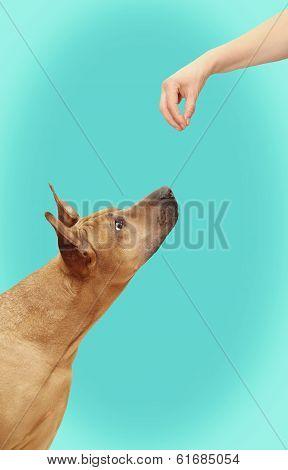 Tease A Dog
