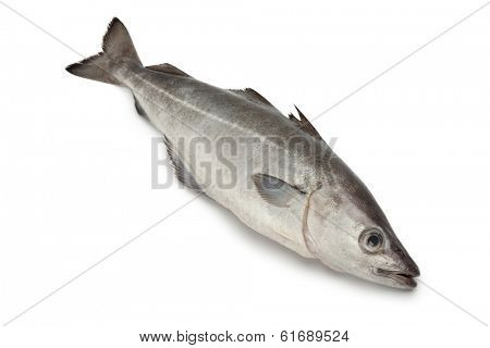 Fresh coalfish fish on white background