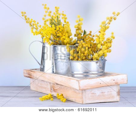 Twigs of mimosa flowers in pails on wooden table