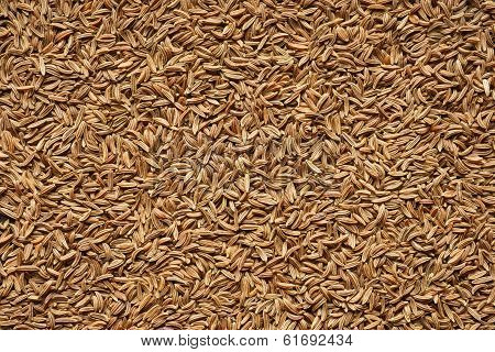Spice - seeds of cumin.