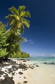 Palm tree above sandy and rocky beach. Site of Survivor Cook Islands, Aitutaki