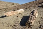 image of petrified  - The petrified forest of Sarmiento in Patagonia - JPG