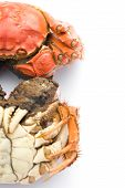stock photo of cooked crab  - two cooked crabs on a white background with clipping path