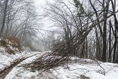 picture of sleet  - Snowy path with trees broken by sleet - JPG