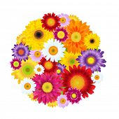Colorful Gerbers Flowers Ball, With Gradient Mesh, Vector Illustration