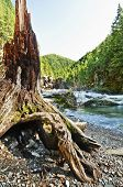 image of driftwood  - Mountain landscape with flowing river and curved driftwood tree in foreground - JPG