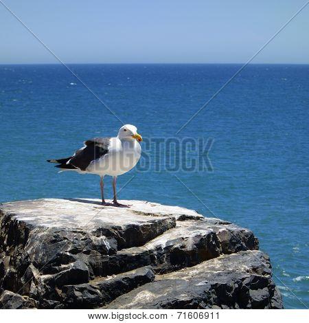 Atop The Sea