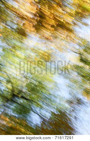 Autumn Trees Abstract