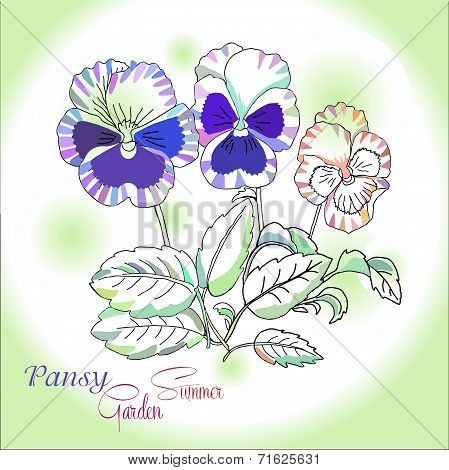 Pansy on green background