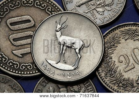 Coins of the United Arab Emirates. Sand Gazelle (Gazella subgutturosa marica) depicted in an UAE twenty five fils coin.