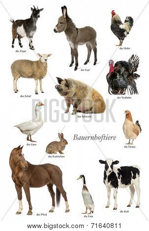 Educational poster with farm animal in German