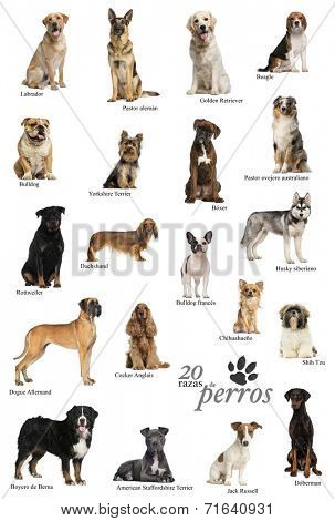 Dog breeds poster in Spanish