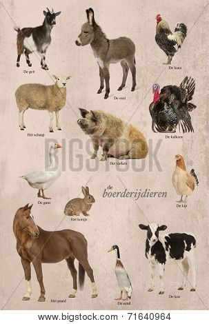 Educational poster with farm animal in Dutch