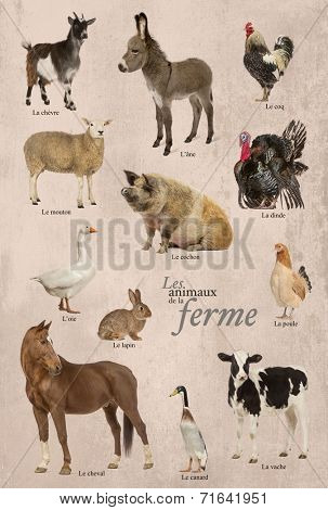 Educational poster with farm animal in French