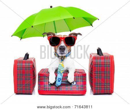 Dog Vacation