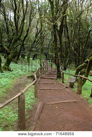 La Gomera - Hiking trail in the National Park Garajonay