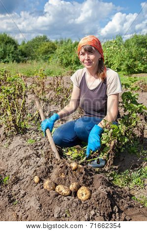 Young Woman Harvesting Potato At The Field