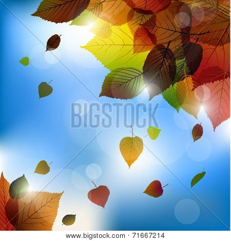 Autumn vector leafs background- fall illustration with back light and blue sky