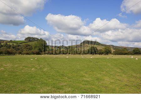 Hillside Scenery
