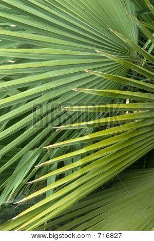 Palm Design