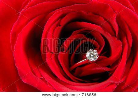 Anillo de compromiso en rosa roja