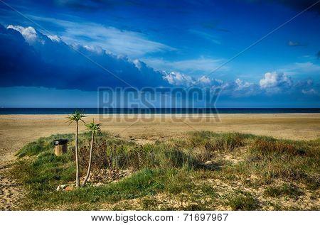 Sandy beach and palms, blue sky. Location: Spain, Tarifa