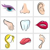 stock photo of flat-foot  - set icons with flat parts of the human body ear nose eyes tongue teeth mouth lips head arm leg  foot - JPG