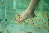 stock photo of fish skin  - Fish Spa for the foot Skin Therapy  - JPG