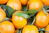 stock photo of satsuma  - background of fresh oranges satsumas with leafs
