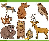 pic of nightingale  - Cartoon Illustration of Funny Wild Animals Set - JPG