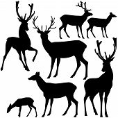 picture of deer family  - deer black and white silhouette set  - JPG