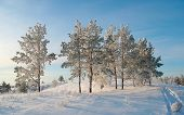 image of ural mountains  - Evening winter landscape with pines on the hill - JPG