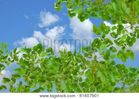 Green Leaf And Beautiful Blue Sky