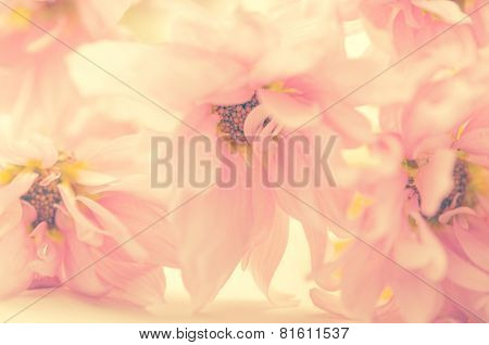 A soft and beautiful light pink color flower background.
