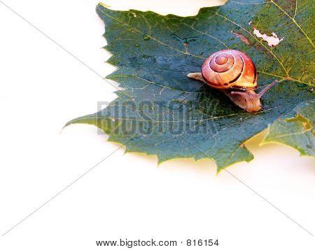 Slow Slug