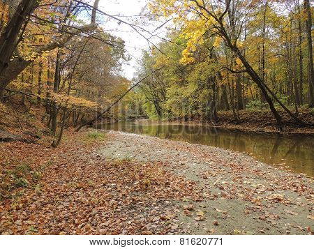 Fall Scenery Along A Gentle Creek