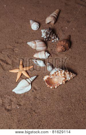 Seashells Background - Macro Shot Of Beautiful Seashells