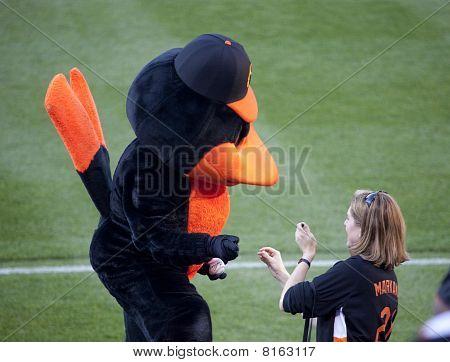 Orioles Bird