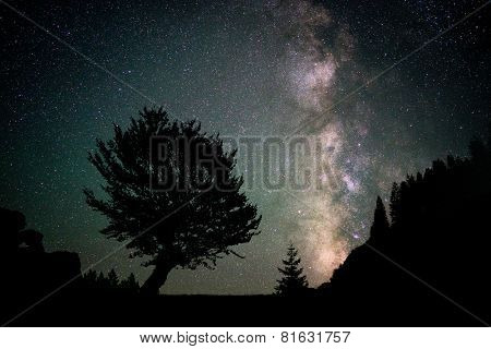 Night beautiful sky as background with some trees around