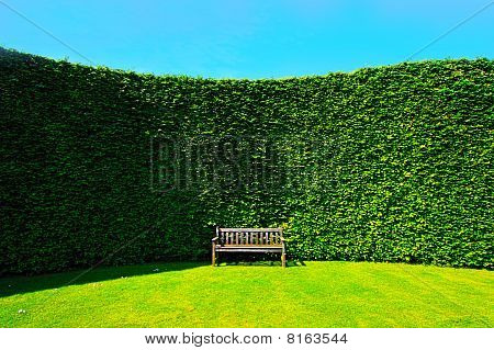 Garden Hedges With A Bench