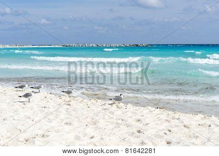 Seagull on the Cancun beach, Yucatan, Mexico