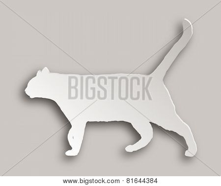 Cat Paper Style