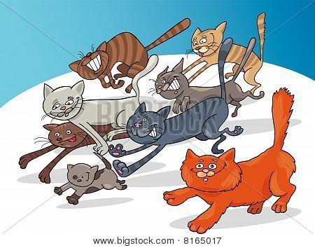 running cats