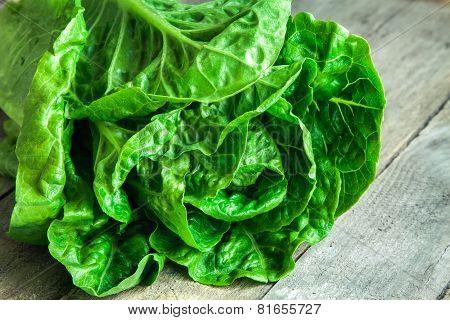 Ripe Organic Green Salad Romano Closeup