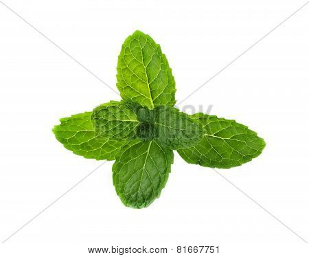 Fresh Mint On White Background